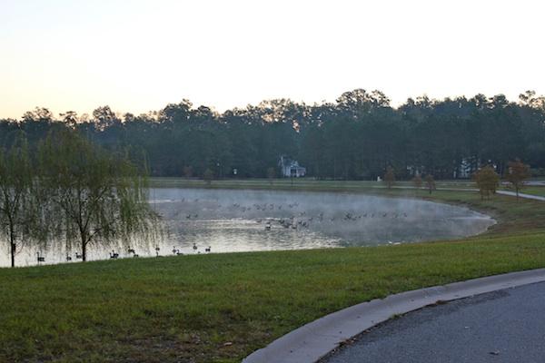 Mist on the Lake.jpg
