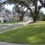 Sidewalks and live oak trees
